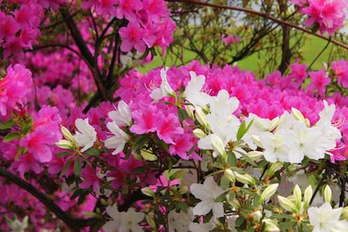 significato fiori - rf giardini - blog giardinaggio
