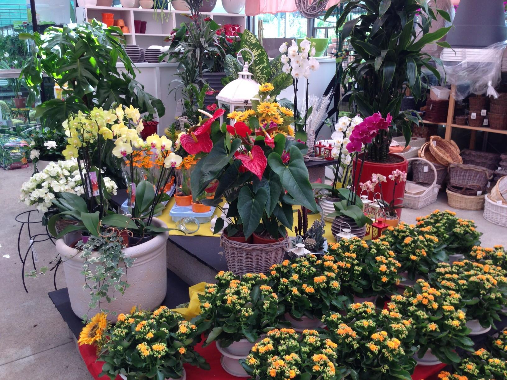 Rf giardini - piante da interno - Bizzarone - Como - Svizzera