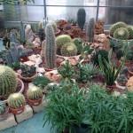 Rf giardini - piante grasse - Bizzarone - Como - Svizzera