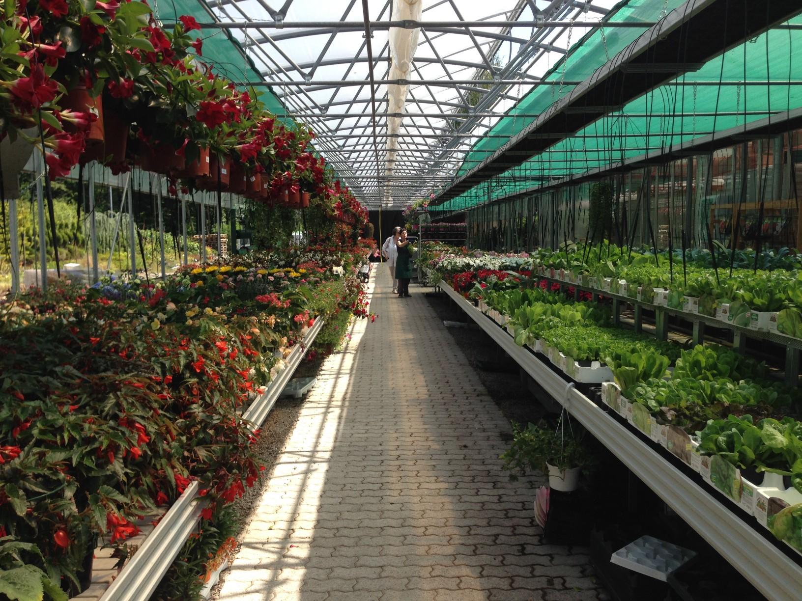 Rf giardini - vivaio - serra - Bizzarone