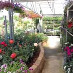 RF Giardini - esterno vivaio Bizzarone -fiori