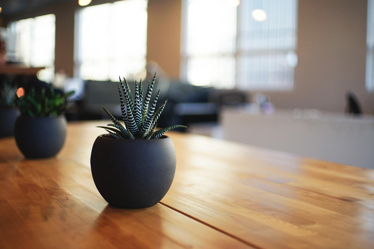 piante da appartamento - rf giardini - blog giardinaggio