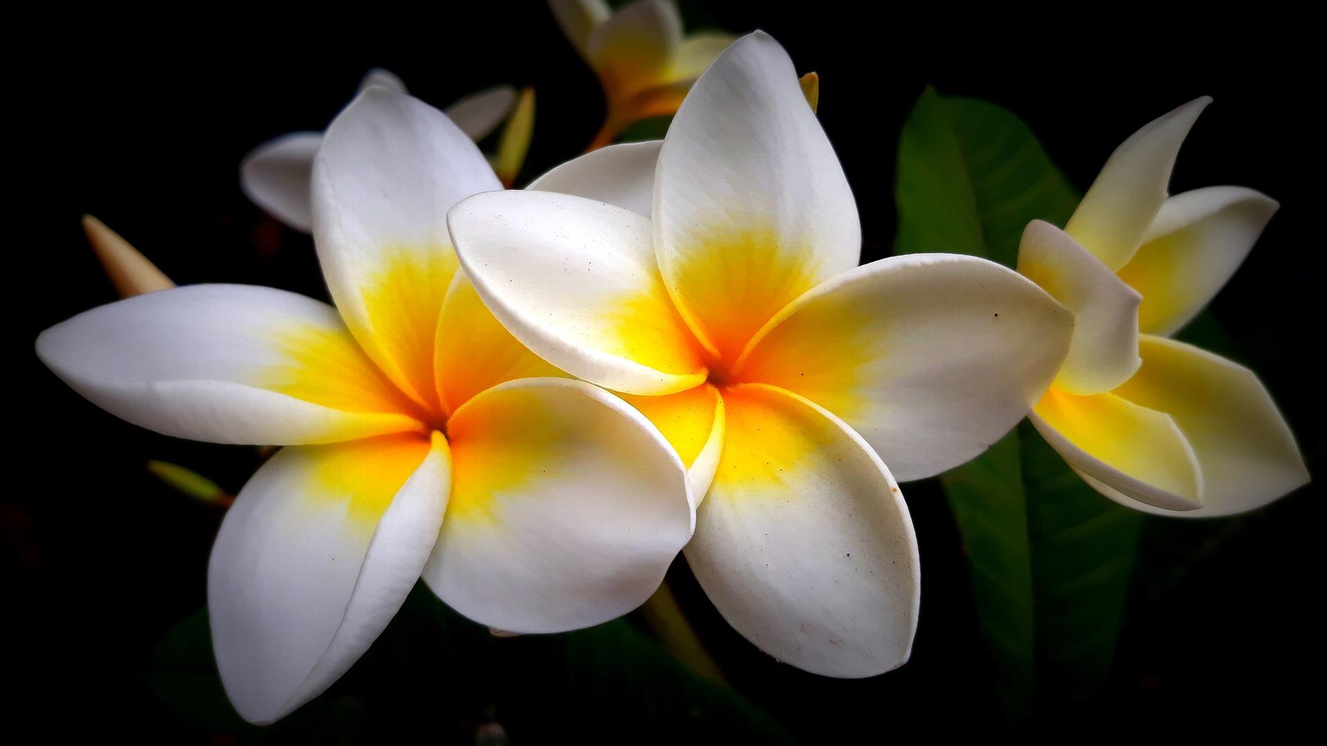 un giardino di fiori bellissimi …